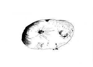 Les Schliesser – »Kartoffelzeichnungen« – »alte Kartoffel«