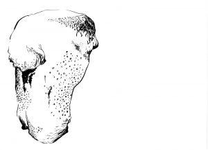 Les Schliesser – »Kartoffelzeichnungen« – »Kartoffelrumpf«